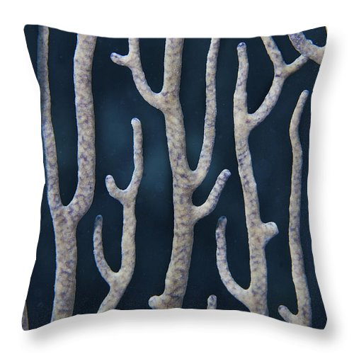 Belize Throw Pillow featuring the photograph Coral Design by Jean Noren