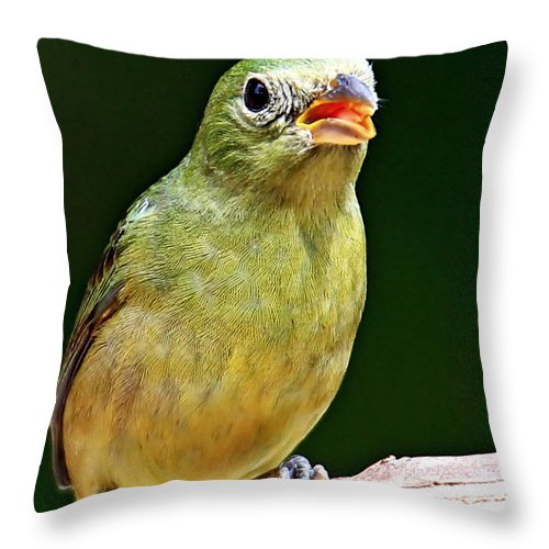 Painted Bunting Throw Pillow featuring the photograph Female Painted Bunting by Ira Runyan