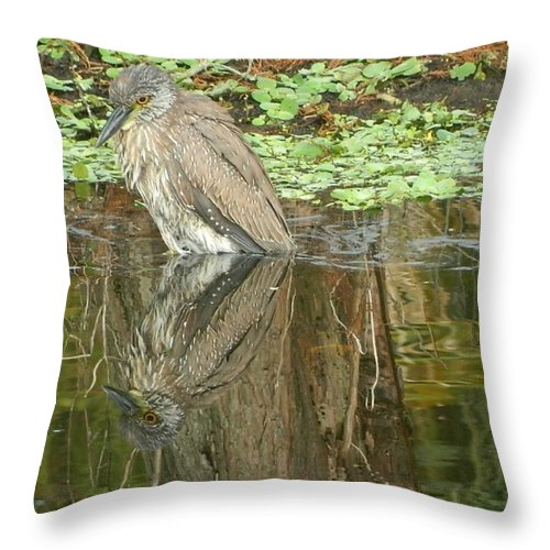 Florida Birds Giclee Framed On Paper Poster Prints In Mixed Medium Throw Pillow featuring the painting Florida Birds by Gunter Hortz