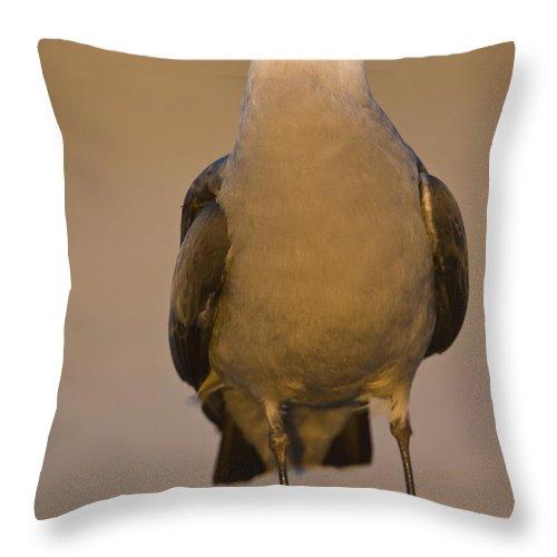 Heermann's Gull Throw Pillow featuring the photograph Heermanns Gull by John Shaw