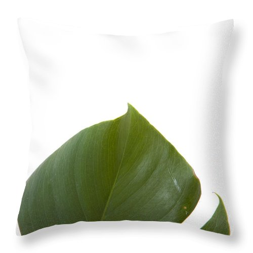 Leaf Throw Pillow featuring the photograph Leaf by Scott Sanders