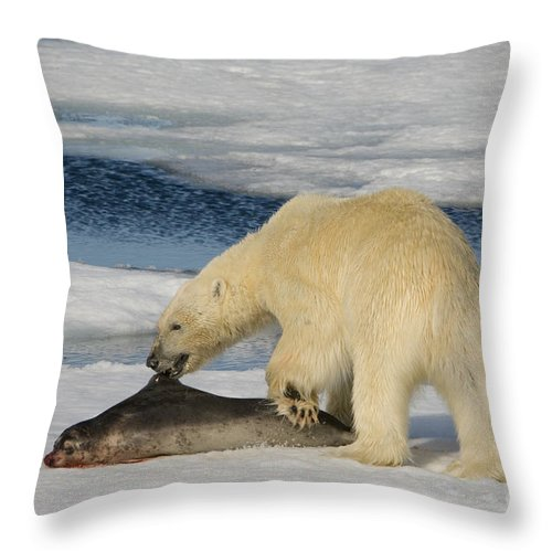 Bearded Seal Throw Pillow featuring the photograph Polar Bear With Fresh Kill by John Shaw