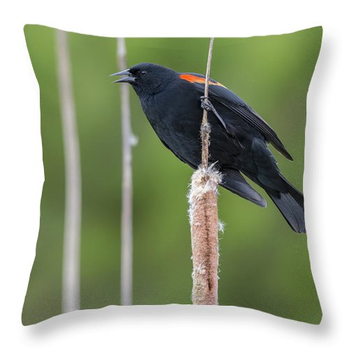 Nature Throw Pillow featuring the photograph Red-winged Blackbird by John Shaw