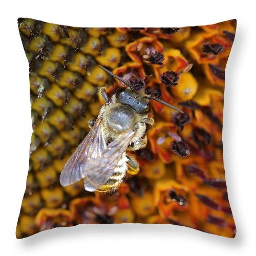 Mccombie Throw Pillow featuring the photograph Sunflower From The Color Fashion Mix by J McCombie