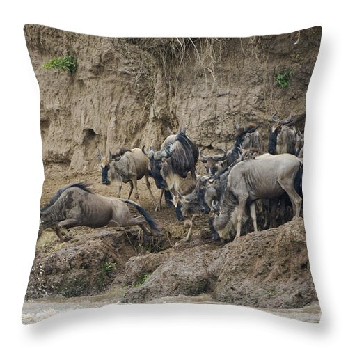 Africa Throw Pillow featuring the photograph Wildebeests Crossing Mara River, Kenya by John Shaw