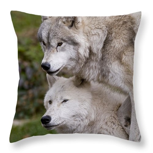 Arctic Wolf Photography Throw Pillow featuring the photograph Arctic Wolves by Wolves Only
