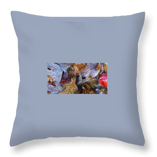 Color Fall Leaf Autumn Connecticut Rain New England Throw Pillow featuring the photograph Colors Of The Fall by Wolfgang Schweizer