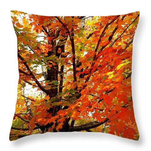 Fall Throw Pillow featuring the photograph Fall Explosion Of Color by Kenny Glover