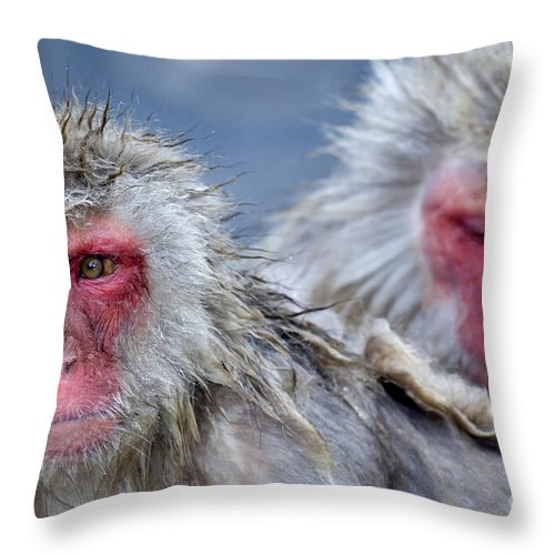 Japanese Macaque Throw Pillow featuring the photograph Japanese Macaques by John Shaw