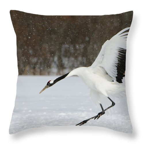 Asia Throw Pillow featuring the photograph Red-crowned Cranes by John Shaw