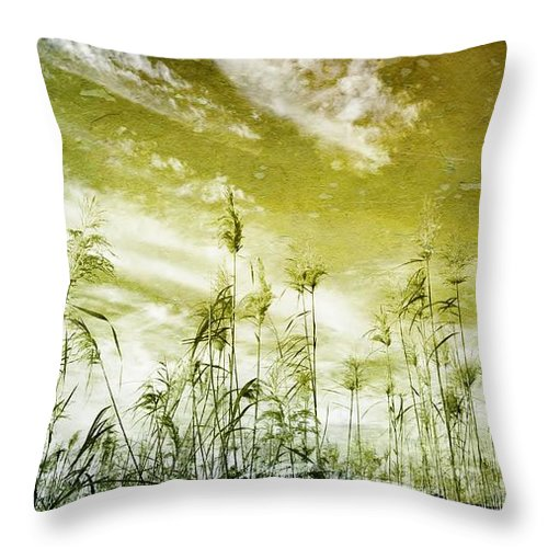 Landscape; Reed Grass; Sky; South Africa; Swartland; Nature; Rural; Farmland; Plants; Clouds; White; Winter; Texture; Throw Pillow featuring the photograph Reed Grass by Werner Lehmann