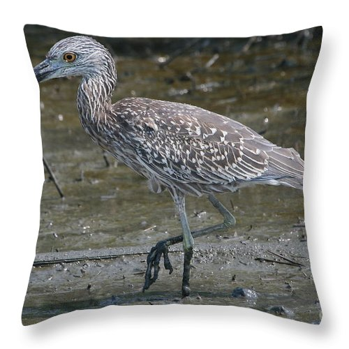 Juvenile Throw Pillow featuring the photograph Yellow -crowned Night Heron by Ken Keener