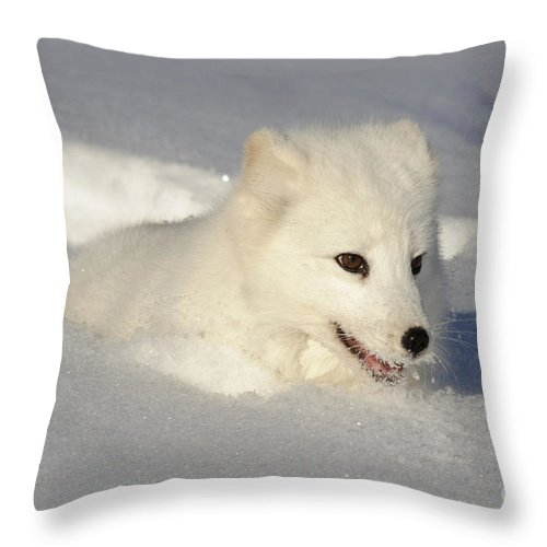 Alopex Lagopus Throw Pillow featuring the photograph Arctic Fox by John Shaw