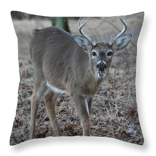 Antlers Throw Pillow featuring the photograph 8 Point Buck by Ken Keener