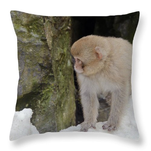 Japanese Macaque Throw Pillow featuring the photograph Snow Monkey by John Shaw
