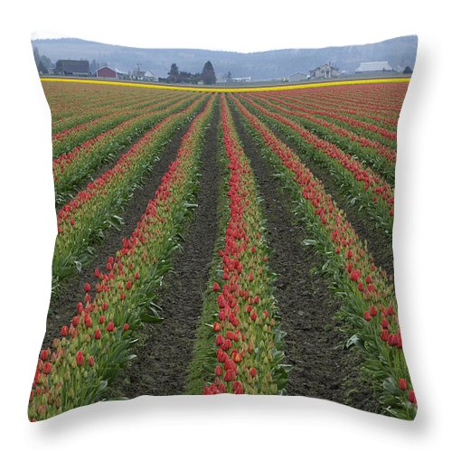 Tulip Field Throw Pillow featuring the photograph Tulip Field by John Shaw