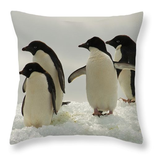 Iceberg Throw Pillow featuring the photograph Adelie Penguins by John Shaw