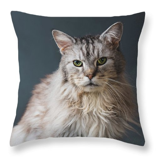 Pets Throw Pillow featuring the photograph Fortunate Tails by Matt Porteous
