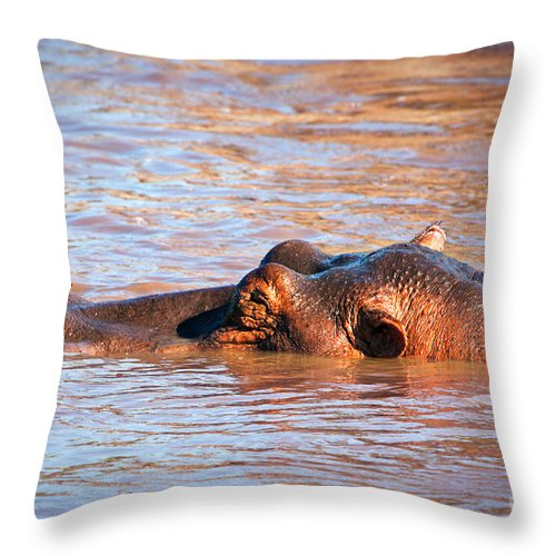 Hippo Throw Pillow featuring the photograph Hippopotamus In River. Serengeti. Tanzania by Michal Bednarek