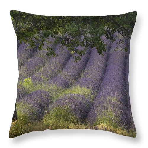 Lavender Throw Pillow featuring the photograph Lavender Field, France by John Shaw