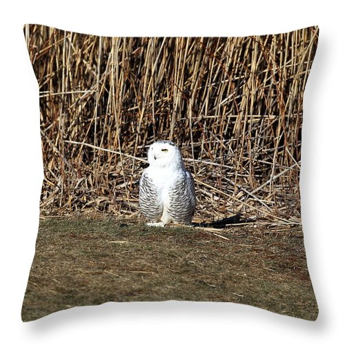 Snowy Owl Throw Pillow featuring the photograph Snowy Owl by Henry Gray