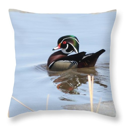 Wood Duck Throw Pillow featuring the photograph Wood Duck by Lori Tordsen