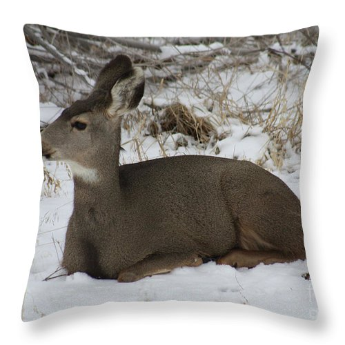 Deer Throw Pillow featuring the photograph A Bed Of Snow by Brandi Maher