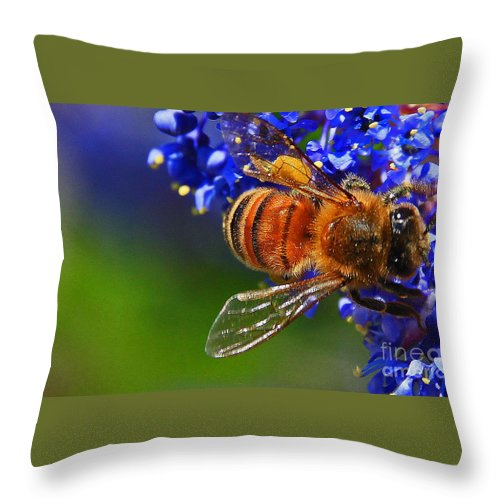Insects Throw Pillow featuring the photograph A Bee's Life by Kris Hiemstra
