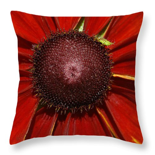 Flower Throw Pillow featuring the photograph A Big Orange And Yellow Flower by Mike Nellums