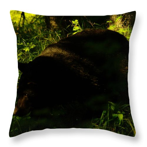 Bears Throw Pillow featuring the photograph A Black Bear by Jeff Swan