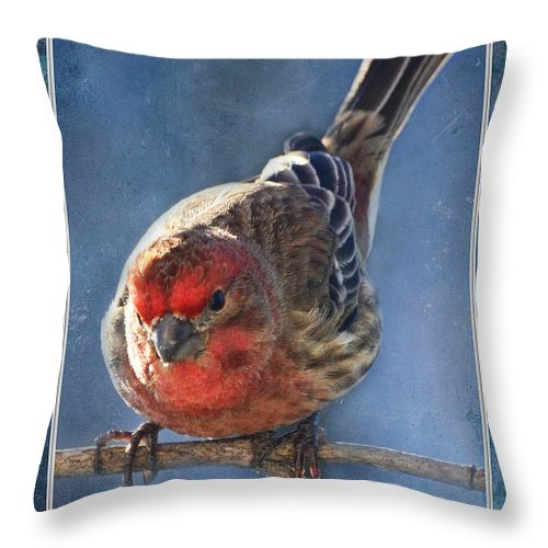 Nature Throw Pillow featuring the photograph A Blue Morning Housefinch by Debbie Portwood