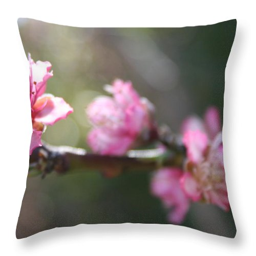 Blossom Throw Pillow featuring the photograph A Bough Of Blurred Peach Blossom by Taiche Acrylic Art