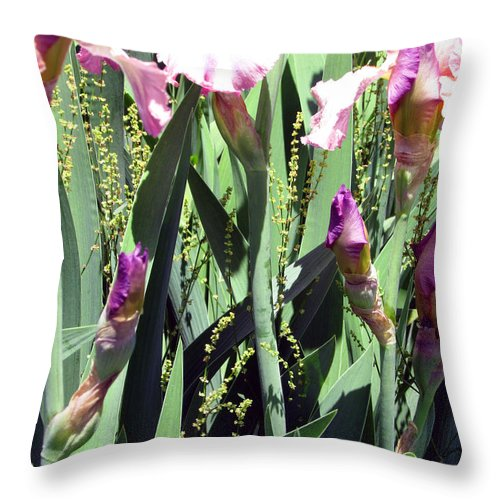Pink Throw Pillow featuring the photograph A Bushel Of Pink by Debi Singer
