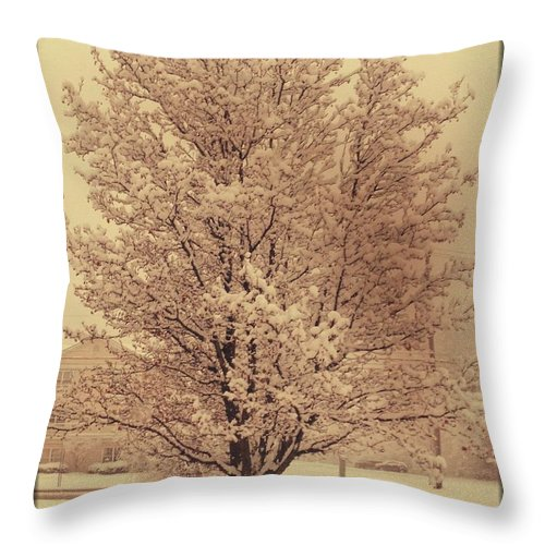 Tree Throw Pillow featuring the photograph A Cold Winters Day by Stacey Mills
