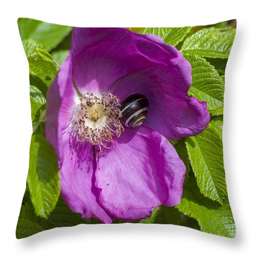 Dog Rose Throw Pillow featuring the photograph A Comfortable Home by Steve Purnell