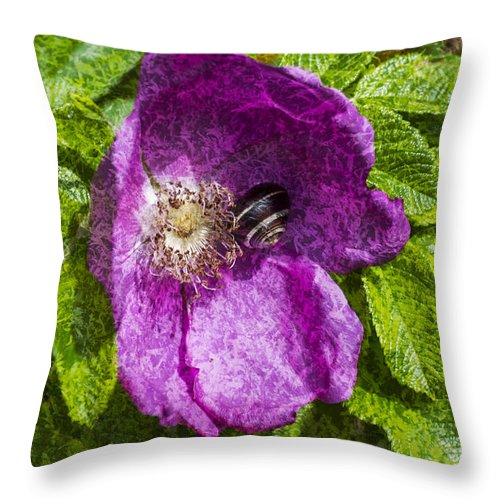 Dog Rose Throw Pillow featuring the photograph A Comfortable Home Textured by Steve Purnell