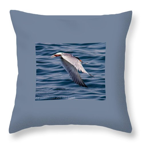 Common Tern Water Lake Outdoors Wildlife Birds Nature All Prints Are Available In Prints Throw Pillow featuring the photograph A Common Tern by Brian Williamson