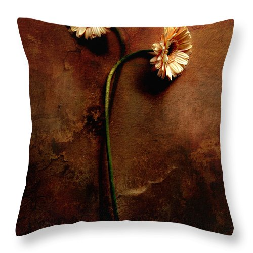Gerbera Throw Pillow featuring the photograph A Couple by Jaroslaw Blaminsky