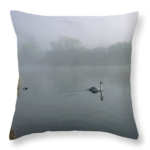 Burton On Trent Throw Pillow featuring the photograph A Cygnet In The Fog by Rod Johnson