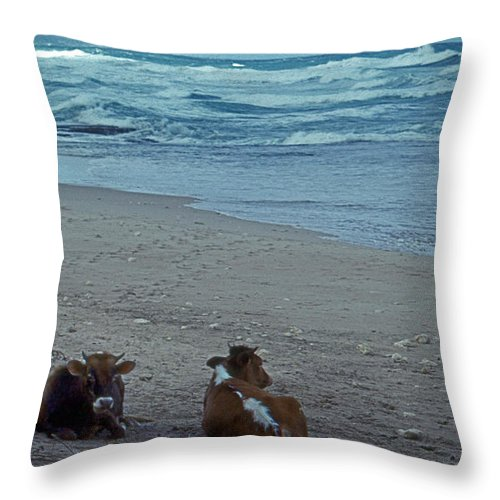 Scenic Tours Throw Pillow featuring the photograph A Day At The Beach by Skip Willits