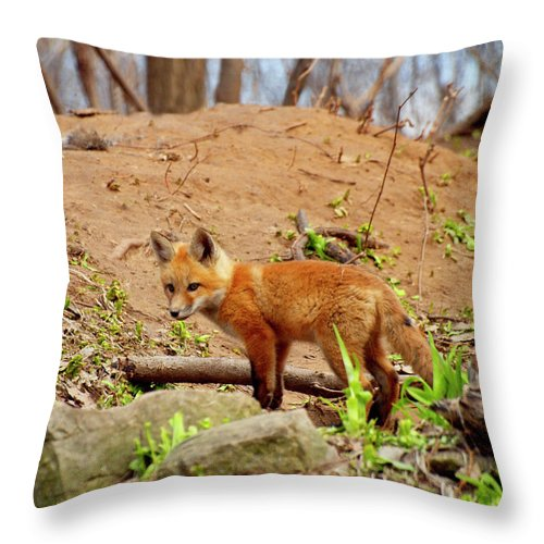 Red Foxes Throw Pillow featuring the photograph A Day At The Den by Thomas Young