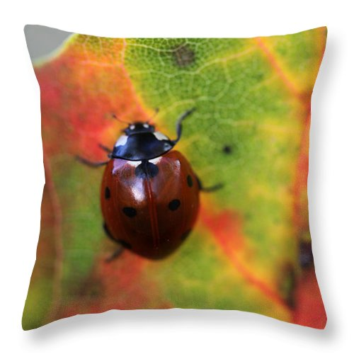 Ladybug Throw Pillow featuring the photograph A Fall Walk 4 by Mary Bedy