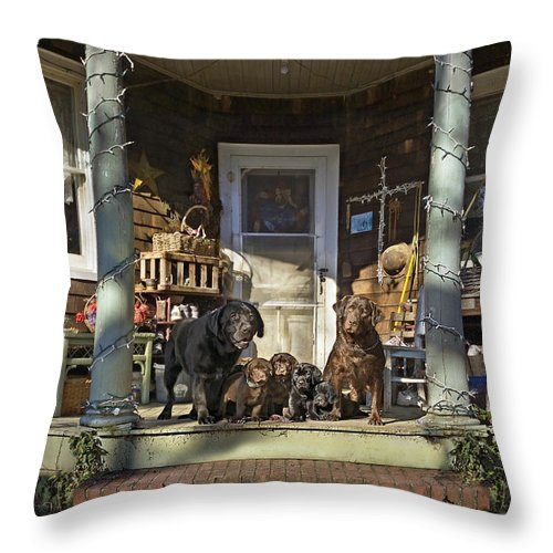 Labrador Retrievers Throw Pillow featuring the photograph A Family Portrait by Dale Hall