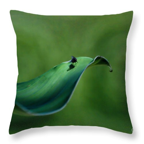 Fly Throw Pillow featuring the photograph A Fly And His Shadow Digital Art by Thomas Woolworth