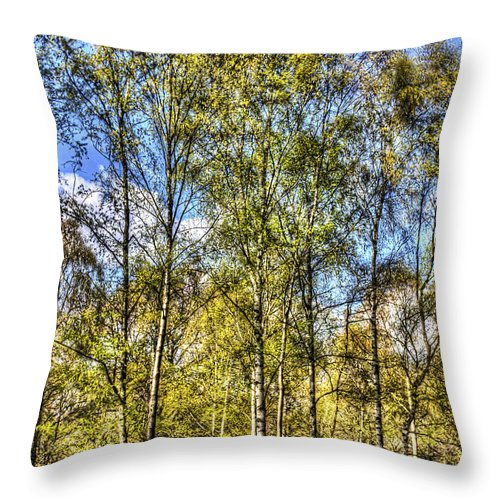 Forest Throw Pillow featuring the photograph A Forest Glade by David Pyatt