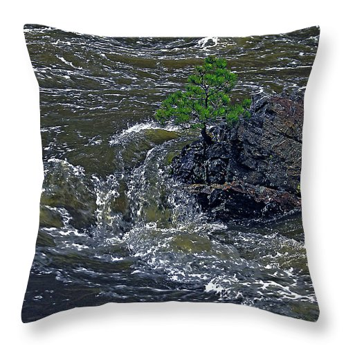 Poudre Throw Pillow featuring the photograph A Forest Of One by David Kehrli