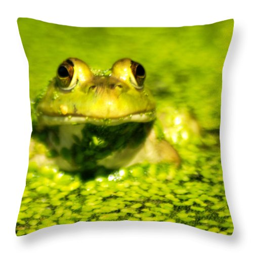 Green Algae Throw Pillow featuring the photograph A Frogs Day by Optical Playground By MP Ray