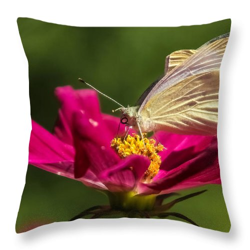 Butterfly Throw Pillow featuring the photograph A Georgous Butterfly Macrophotography by Stwayne Keubrick
