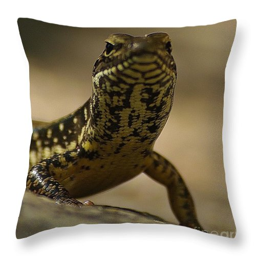 Golden Skink Throw Pillow featuring the photograph A Golden Skink by Blair Stuart