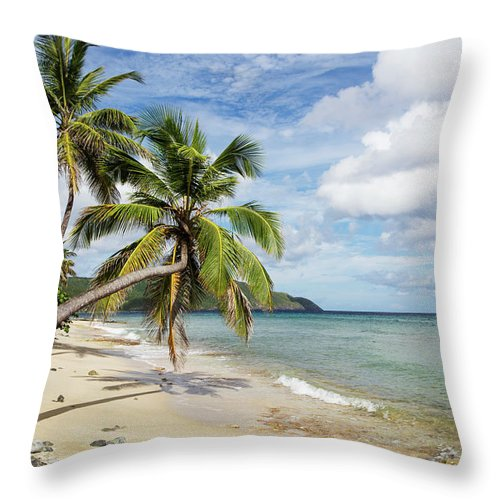 Horizon Throw Pillow featuring the photograph A Gorgeous Palm Tree Stretches by Jenna Szerlag
